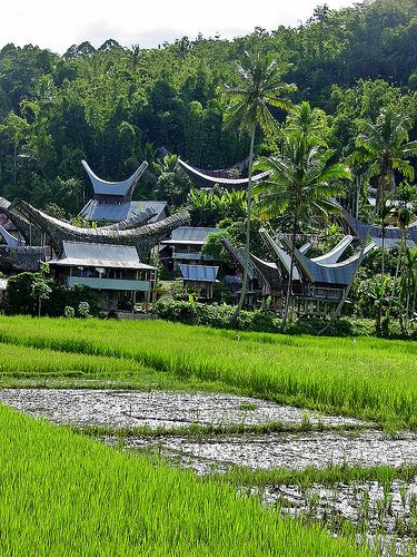 Sulawesi - Toraja - Rice Paddies near Rantepao Indonesia