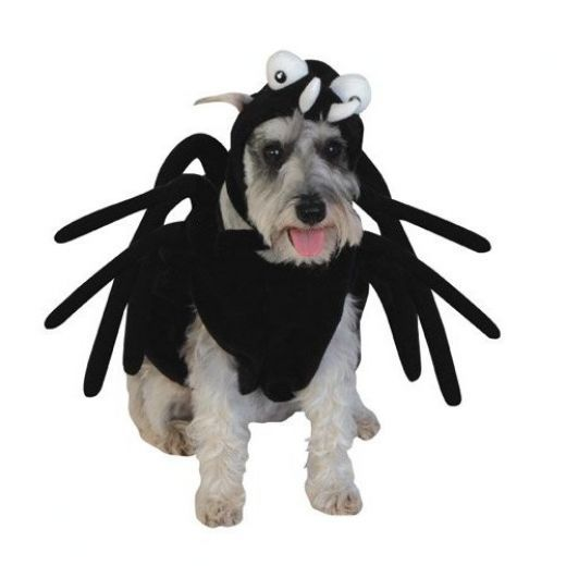 Best 25+ Dog spider costume ideas on Pinterest | Spider ...