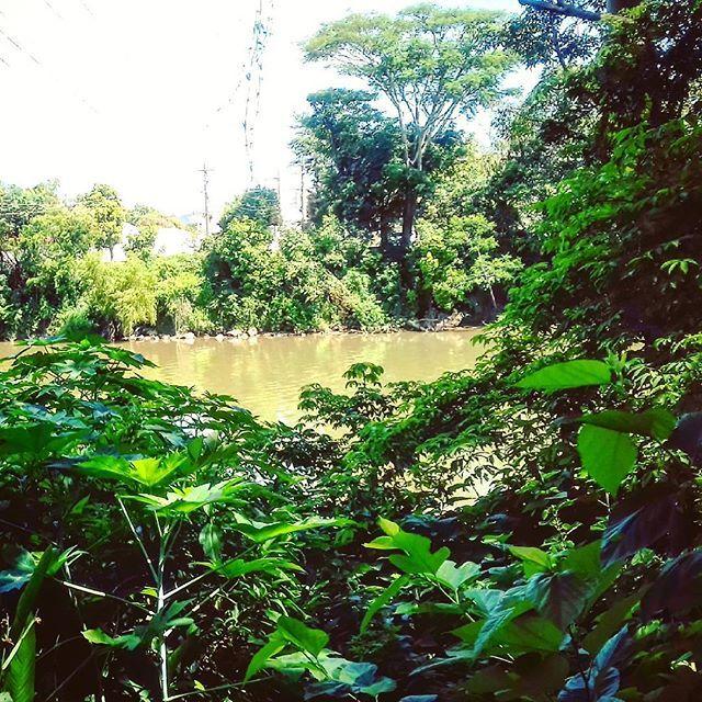 【amerriginal】さんのInstagramをピンしています。 《#ソル #森 #川 #自然 #野生 #生 #river #intothenature #intothewild #wildlife #wildstyle #wild #instawild #instanature #photonature #photography #fotografia #photo #gratitude #grateful #gratidao #flod #natur #vild #skog #Sol #natureza #nature #naturaleza #natura》