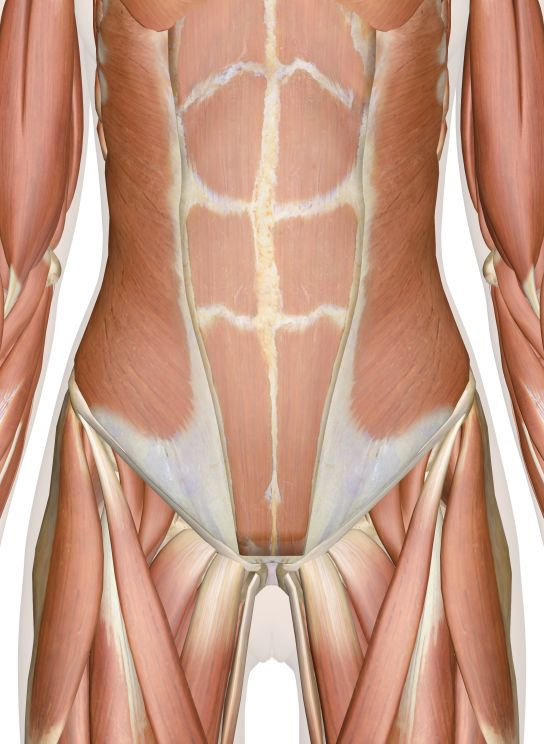 16 Best Human Anatomy Resources Images On Pinterest Human Anatomy