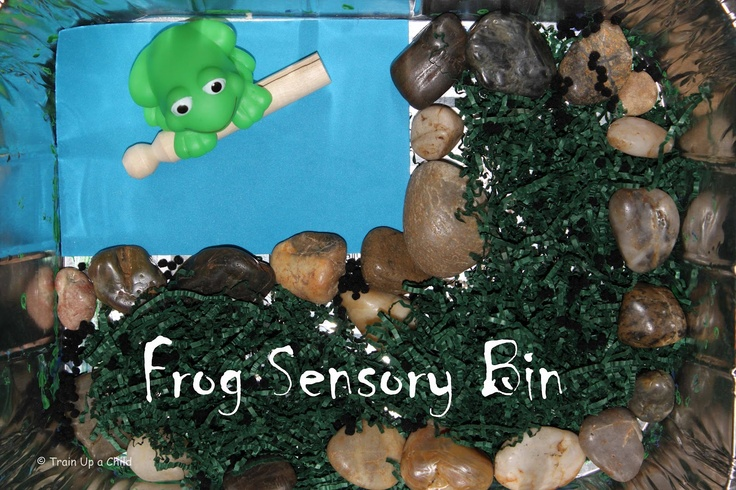 Frog Sensory Bin and other activities: Learning Plays, Frogs Activities, Frog Activities, Frogs Books, Books Books Activities, Kindergarten, Books Theme Crafts, Frogs Sensory, Plays Imagination