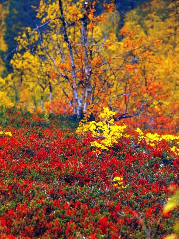 #Kleurrijk #:Lapland