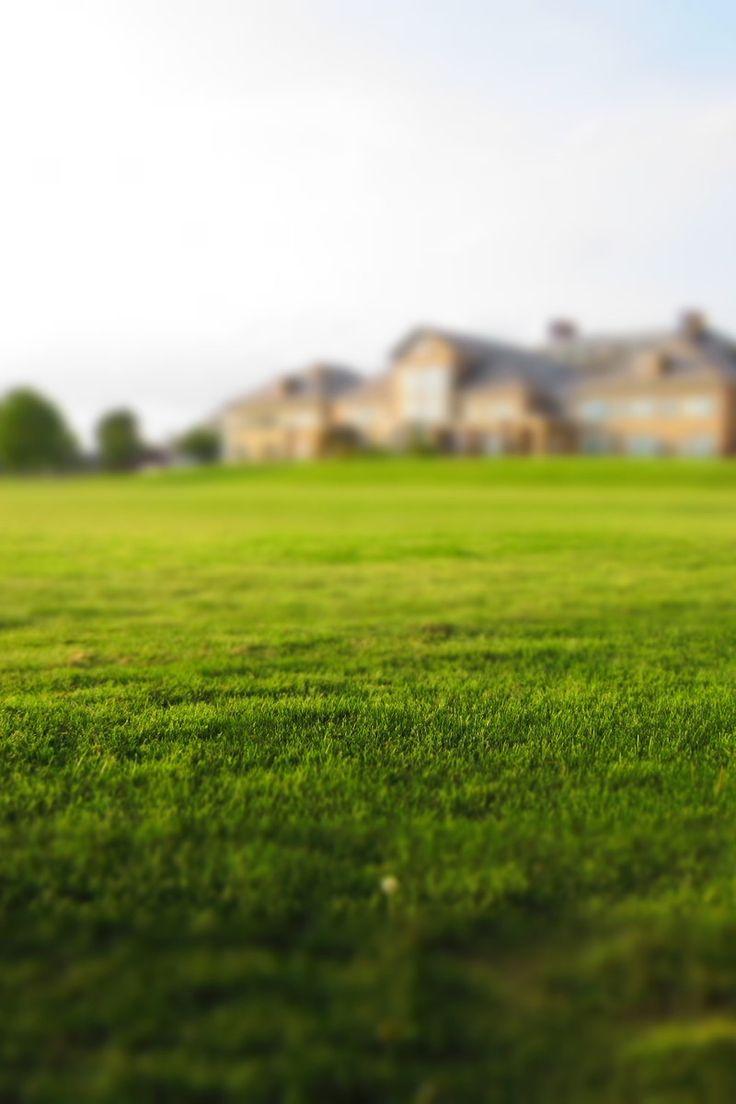 Free stock photo of grass, meadow, estate, turf