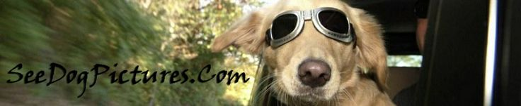 Male dog names female dog names  male dog names with meaning female dog names with meaning