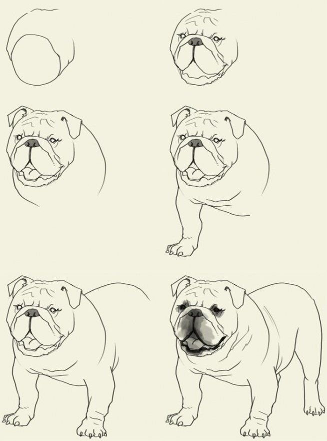 How to draw a bulldog? .. ♥ ~~ step by step step by step. #dog