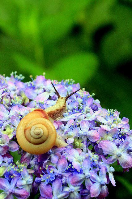 A delightful place to be if I were a snail