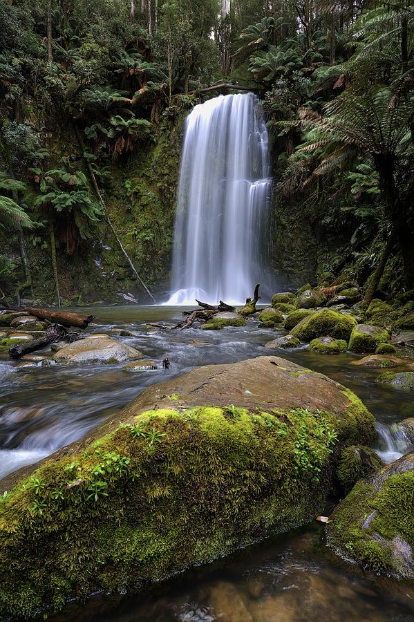 Rainforest by John Dekker (Beauchamp Falls in the Otway Ranges rainforest, Victoria, Australia)