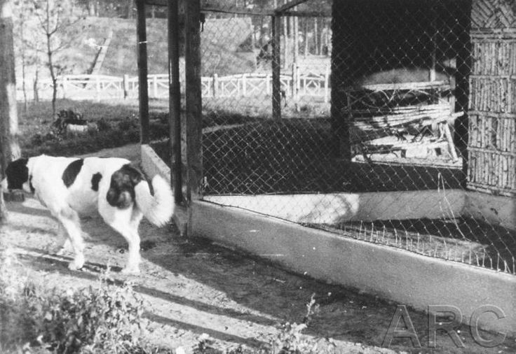Barry, Kurt Franz's St. Bernard, is loitering around at the zoo. On the right the fox cave, behind it another cave for captured forest animals.
