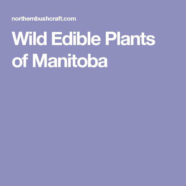 Wild Edible Plants of Manitoba