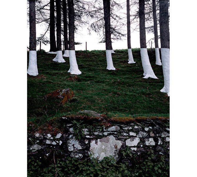 Zander Olsen's Tree, Line