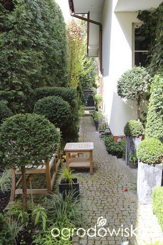 Ogród nie tylko bukszpanowy - część III - strona 531 - Forum ogrodnicze - Ogrodowisko