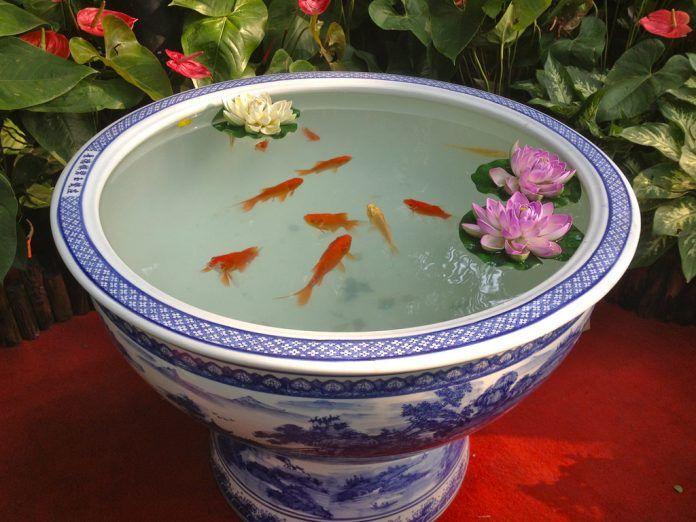 รวมไอเด ย เล ยงปลาสวยๆ ในพ นท จำก ด โดยไม ต องทำบ อเล ยง ในงบประหย ด Ihome108 Indoor Water Garden Small Water Gardens Container Water Gardens