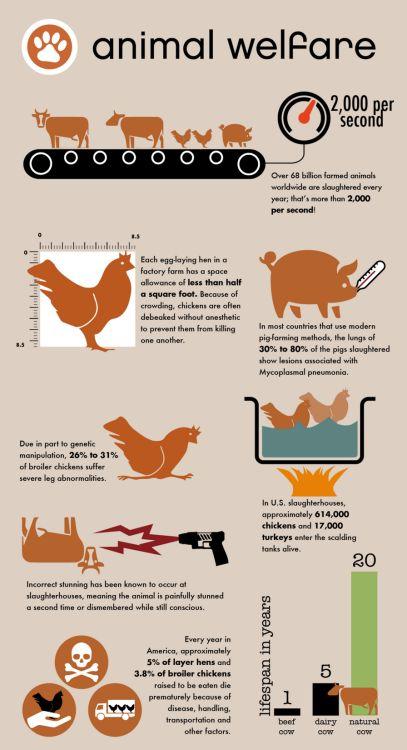 #vegan for animal welfare