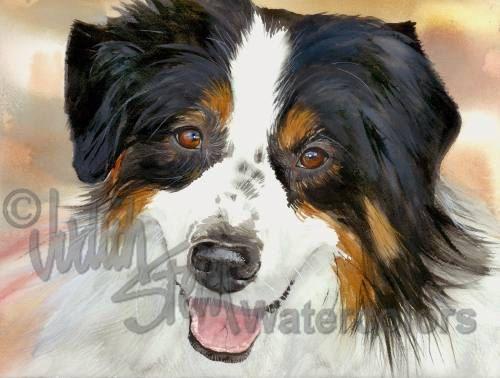 PASTOR australiano mascotas retrato acuarela Art Print