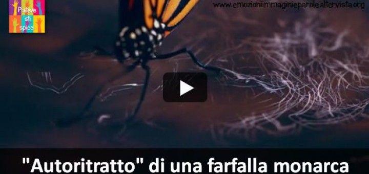 Autoritratto di una farfalla monarca