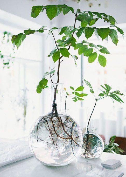 Sublimieren Sie die Pflanze bis zu ihren Wurzeln. Selbst wenn Sie Ihre Pflanzen in dekorative Objekte verwandeln möchten, zeigen Sie sie bis zu ihren Wurzeln! Nichts einfacher als das, Sie benötigen eine große Vase aus klarem Glas, die die Entwicklung der Pflanze im Laufe der Zeit offenbart. Ideal für die Schaffung eines poetischen Universums im Naturgeist.