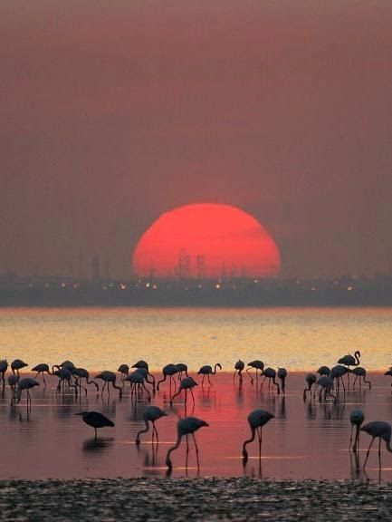 Atemberaubende Silhouette Shots ~ Flamingos