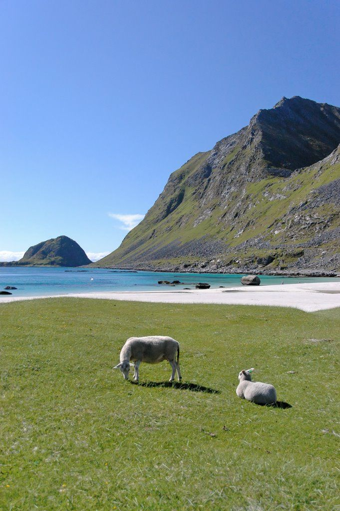 Hauklandsstranden – best beach in Norway (by the Norwegian newspaper Dagbladet) -- Lofoton Islands