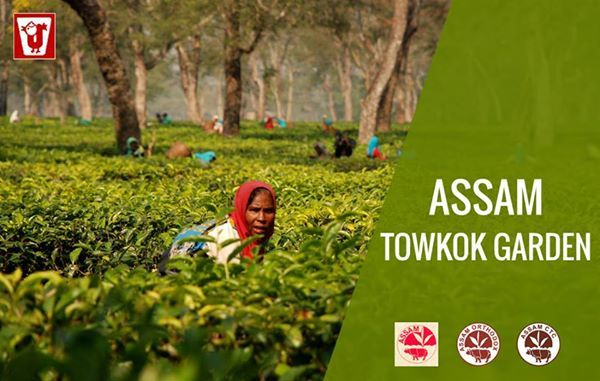 """#TowkokEstate is located in #Assam, a state of India in the North Eastern Region. Along the banks of the Towkak river lies the fertile land of the Towkok Tea Estate. In Tai language Towkok means the """"Dancing tortoise"""". The topography of the land also looks like a tortoise's shell, which is generally plain spotted with mild hills. The liquor of the tea from this region is #smooth and #strong and famous for its #moultycup."""