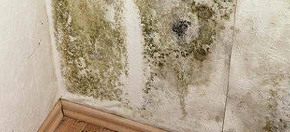 éradiquer les moisissures sur un mur