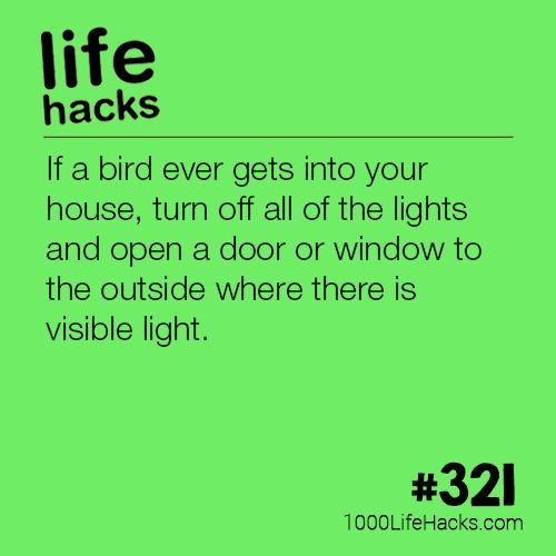The post Get a Bird Out of Your House appeared first on 1000 Life Hacks.