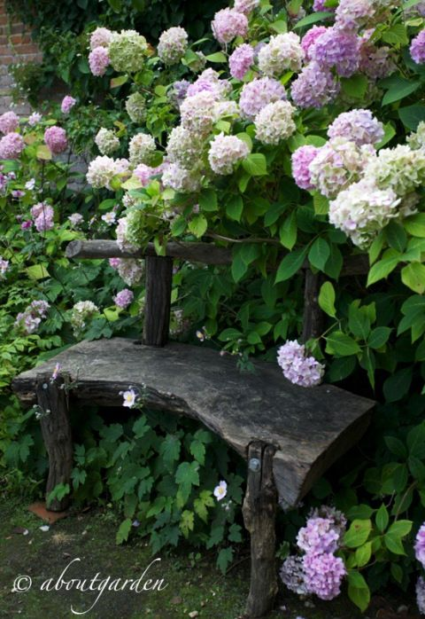 Charming garden bench surrounded by hydrangeas...a quiet place to sit and relax