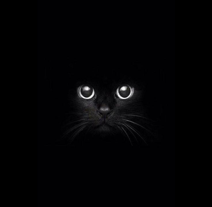 Schwarze Katze Today Pin Schwarze Katze Kunst Katzen Kunst Coole Katzen
