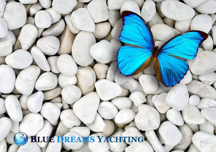#mykonos #bluedreams #yachting #travel #charters #yachts #cyclades #luxury #honeymoon #wedding #anniversaries #proposals #миконос #медовыймесяц #свадьба #годовщина #греция #киклады #море #лето #Яхты