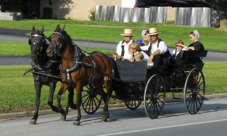 37 Best Images About Amish On Pinterest Ohio Allergies And Secret Life