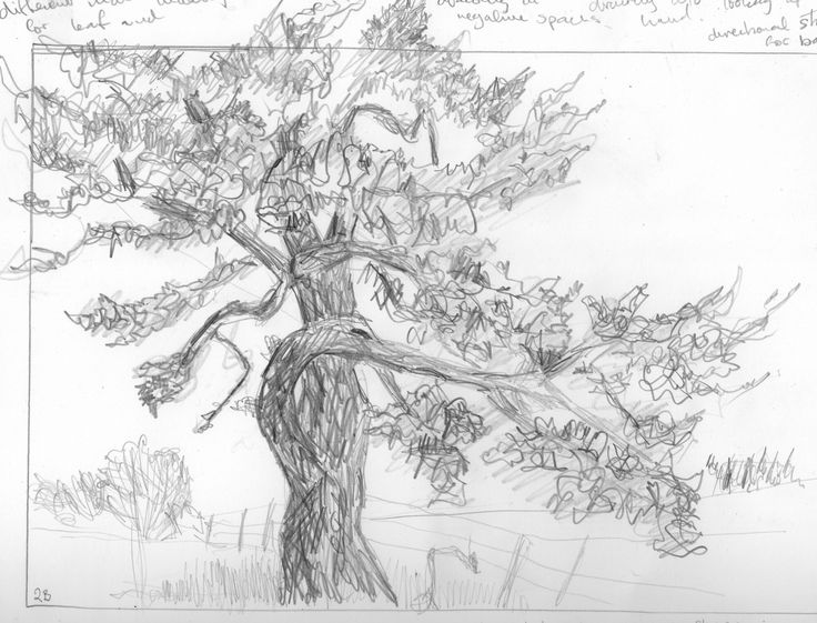 how to draw a white birch tree