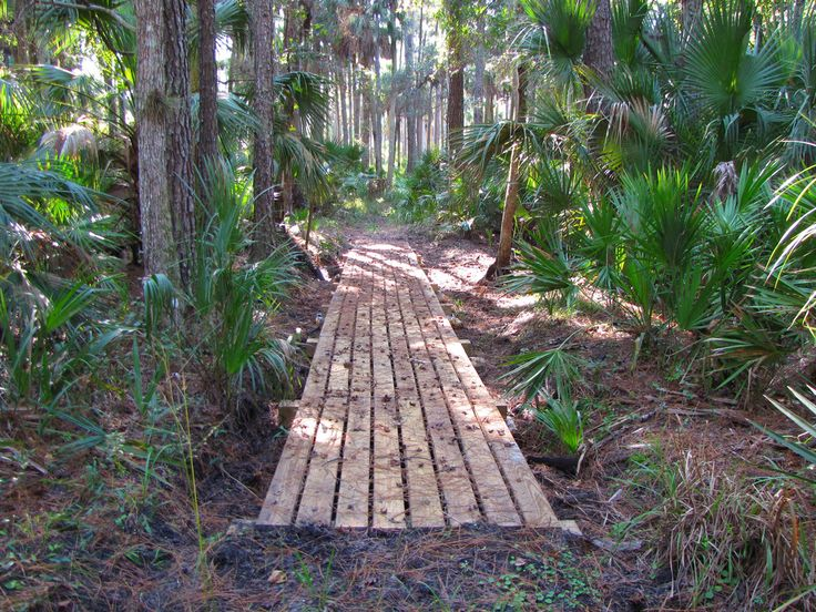 Traveling through dense forests of pine and palmetto, here's a guide to Central Florida's best section hikes on the Florida Trail.