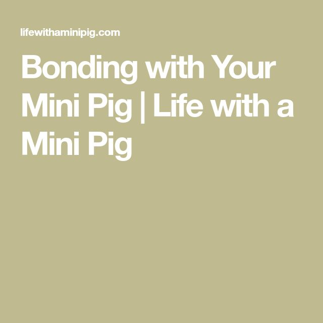Bonding with Your Mini Pig | Life with a Mini Pig