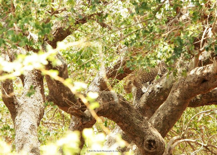 Can YOU spot the animal? :)   Credit: http://ow.ly/Y6F7i   #afritrip #Kruger