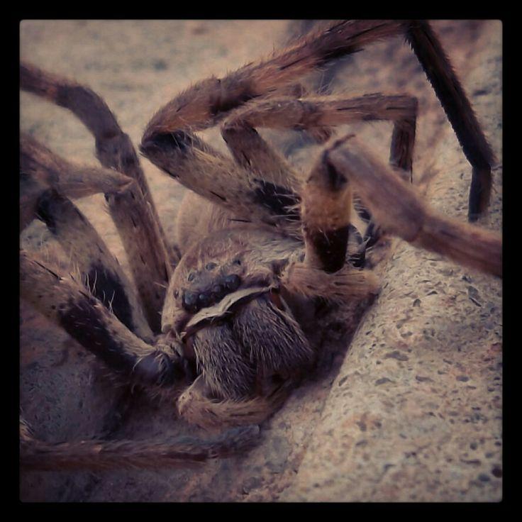 8 legged creature