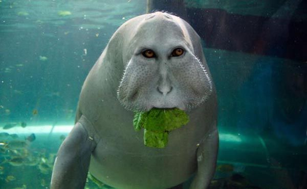 26 Pics of weird photoshopped animals — Bajiroo.com | El ...