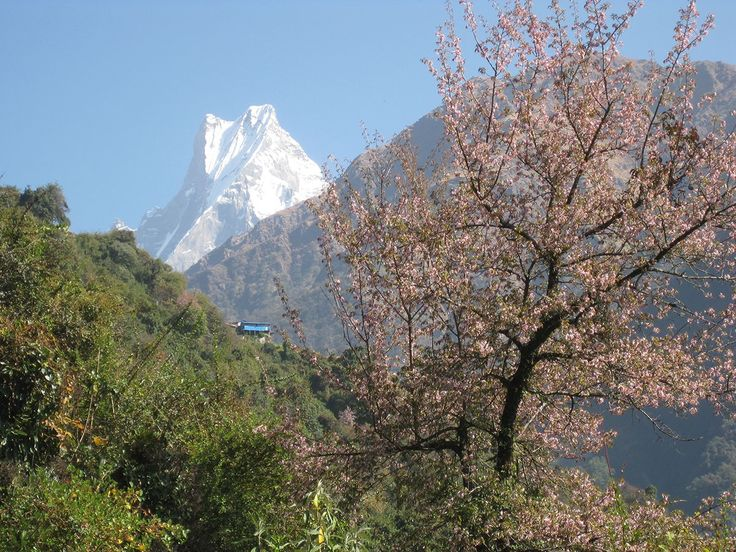 Machapucchare; 'fish tail' mountain.   #nepal #himalayas #hikingnepal