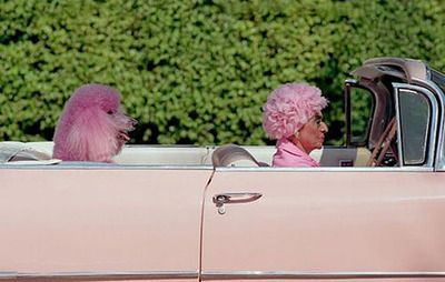 badass: Pink Lady, Funny Dogs, Pink Poodle, Pink Cars, Mary With, Funny Humor, Bad Photo, Crazy Cat, Funny Pet
