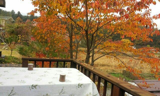벗나무 단풍밑에 가을날!~