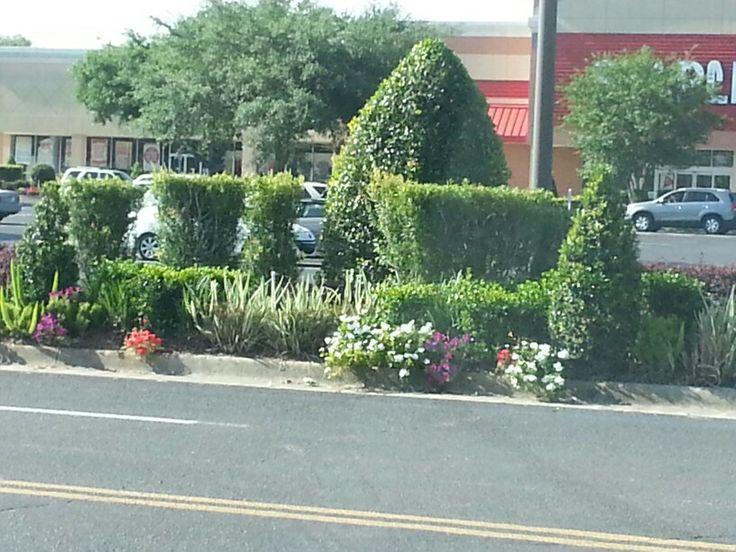 Best buy ocala landscape ideas pinterest for Landscaping rocks ocala florida