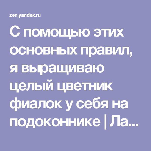 С помощью этих основных правил, я выращиваю целый цветник фиалок у себя на подоконнике   Лайфхак - Полезные советы   Яндекс Дзен