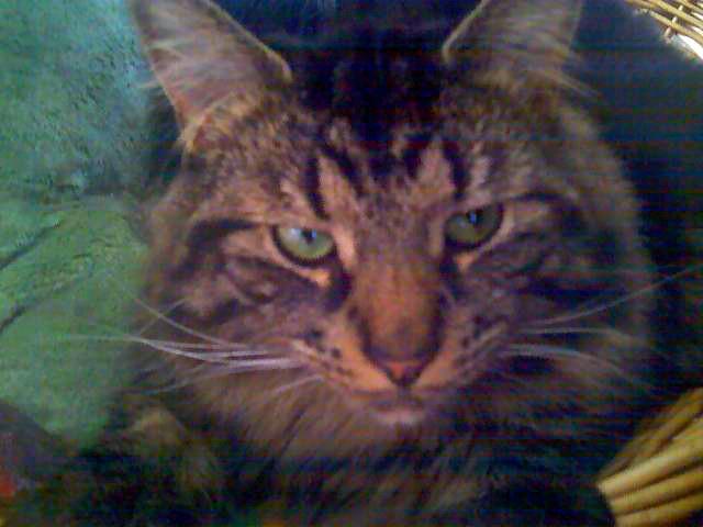 Big Boy Buddy....my gentle giant :)Big Boys, Boys Buddy'S Mi, Buddy'S Mi Gentle, Boys Buddy Mi, Furries Friends, Feline Frenzy, Cat Dogs, Gentle Giants, Fun Furries