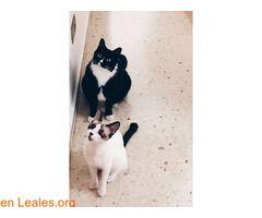 Blanquita se escapó en Vecindario  #Perdido #Encontrado #sebusca #extraviado #LealesOrg  Contacto y info: Pulsar la foto o: https://leales.org/perdidos-o-encontrados/gatos-perdidos/blanquita-se-escapo-en-vecindario_i2665 ℹ  Blanquita se nos ha escapado!.Está en celo y ha debido saltar por el balcón de un tercer piso en Vecindario.Si la ves llámanos!.Estamos desesperados buscándola.   Acerca de esta publicación:   Esta publicación NO ha sido creada por Leales.org y NO somos responsables de su…