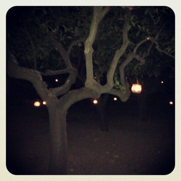 #Giardino Notturno