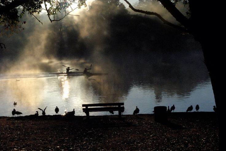 Rowers Emmerentia dam, Johannesburg, South Africa