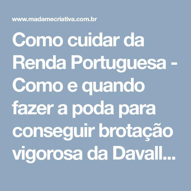 Como cuidar da Renda Portuguesa - Como e quando fazer a poda para conseguir brotação vigorosa da Davallia Fejeensis