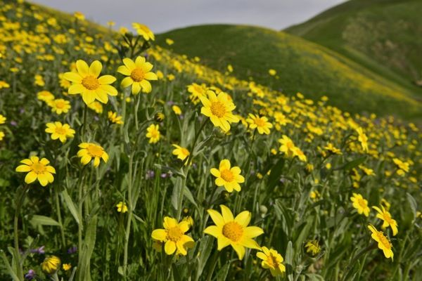 Wildflowers Starting to Look Good at Wind Wolves Preserve | KCET