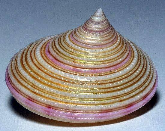 Вячеслав Гераскевич Really? Looks like a hat!  Beautiful gold and pink...el