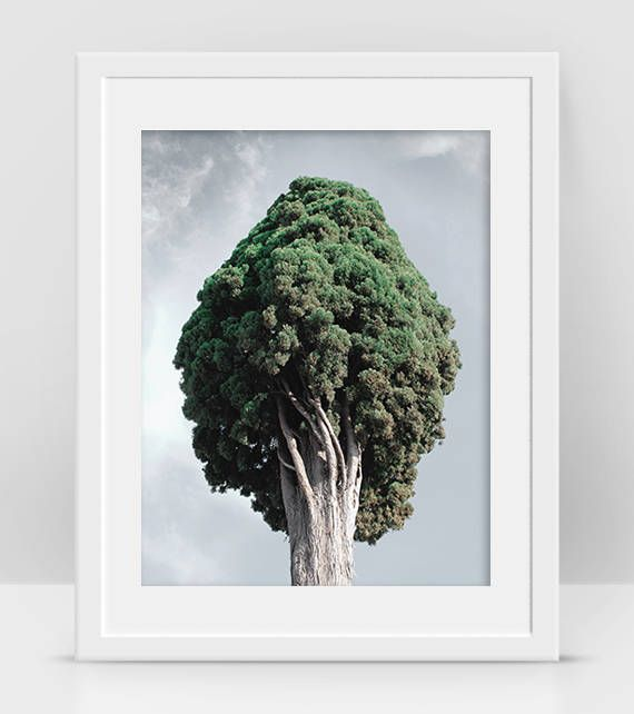 Cypress Tree Photo, Forest Green Tree Poster, Landscape Tree Wall Art, Forest Tree Art, Cool Poster, Gift For Boss, Nature Poster Art House, Home Decor, Digital Download, Printable Wall Art by InogitnaDesigns