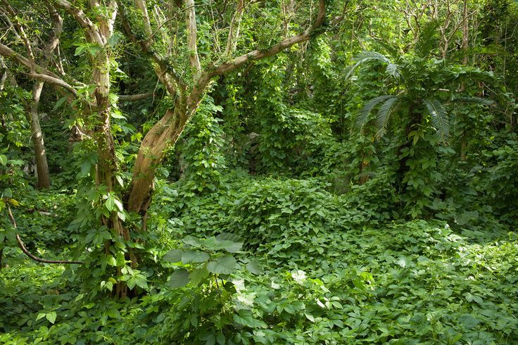 Ancient Ruins Covered by Tropical Jungle