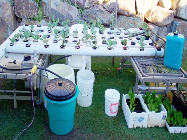 How to Build a Hydroponic Garden via www.wikiHow.com